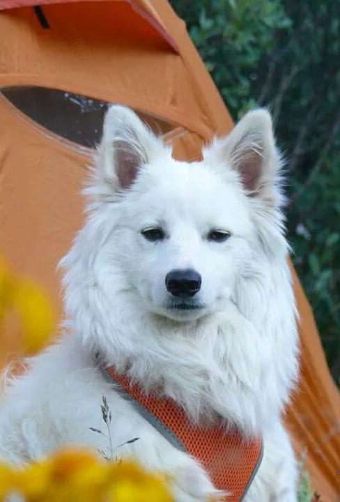 Tarragon dog